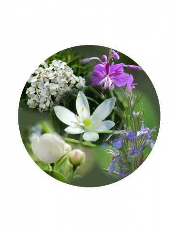 Help of Flowers