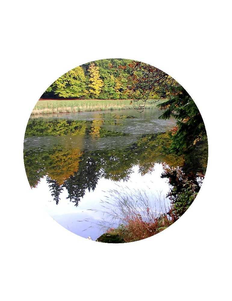 Mother Hulda Pond