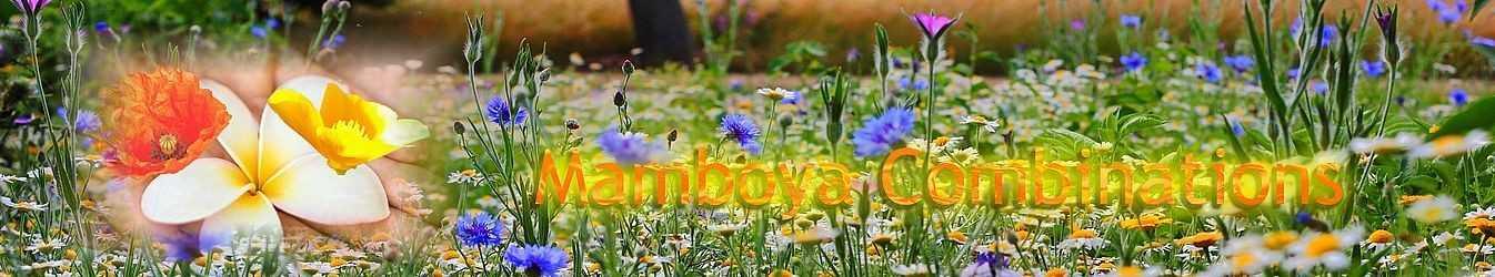 Mamboya Blütenessenzen Mischungen