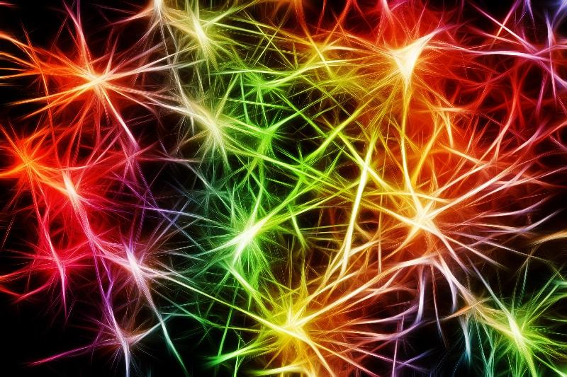 nerv cells