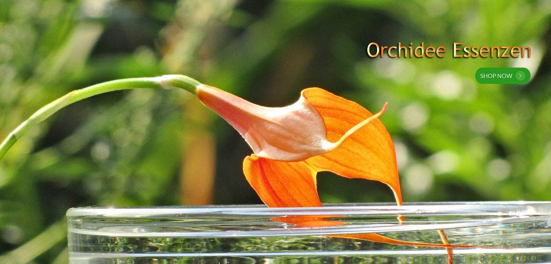 Orchideenessenzen