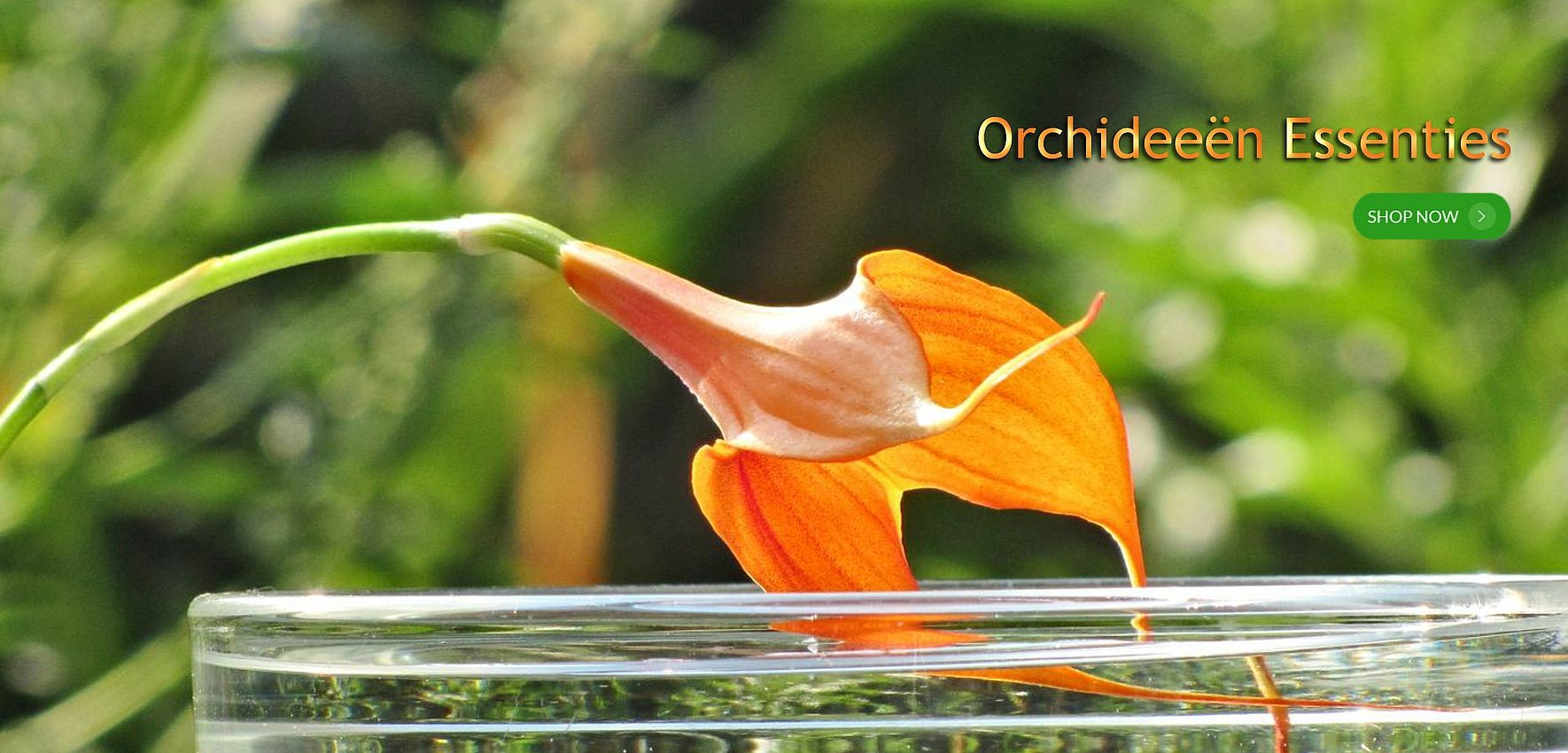 68-orchidee-essenties