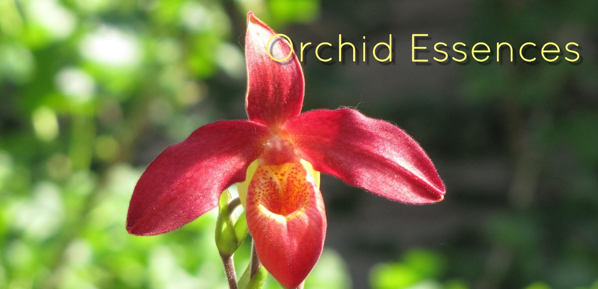 orchidessences