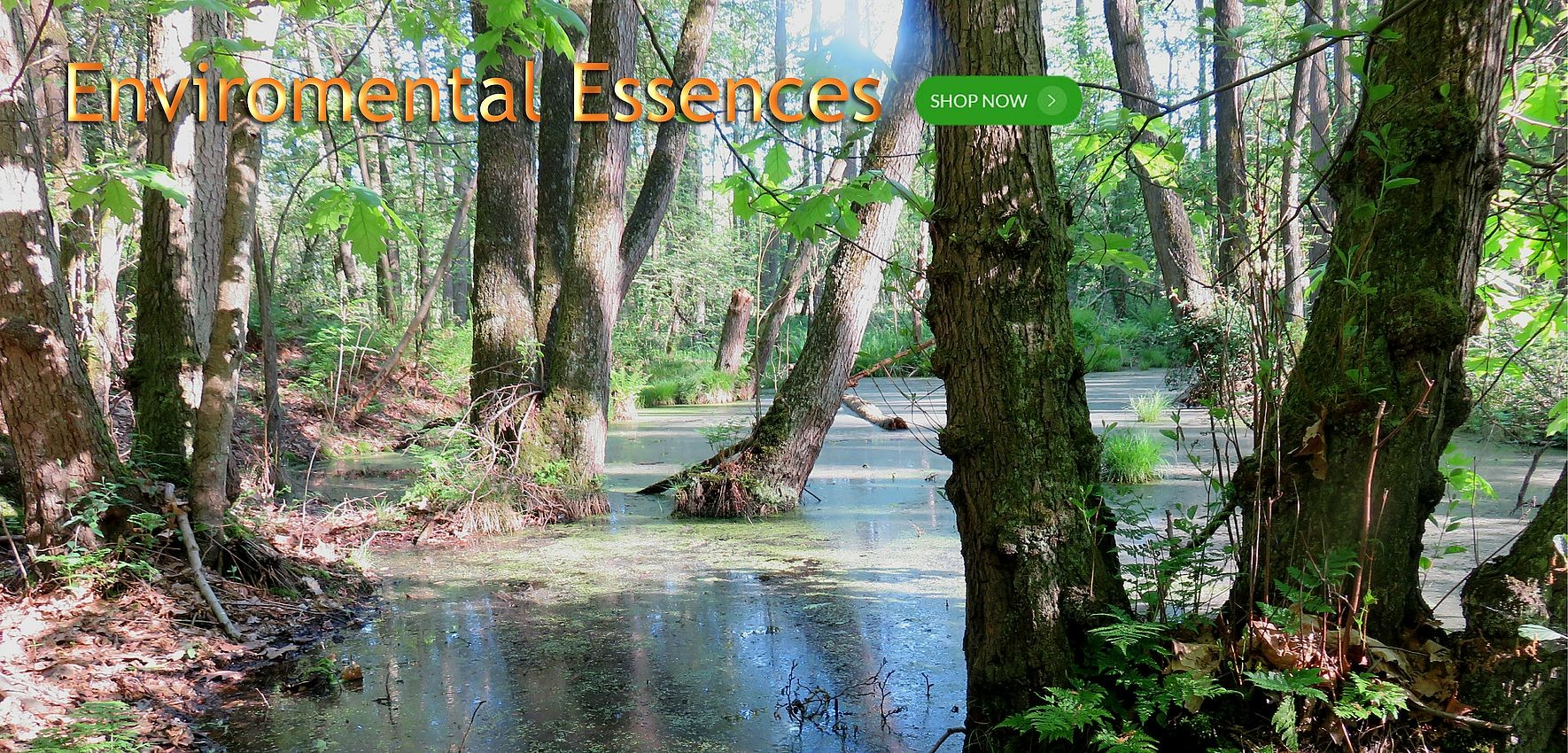 Environmental Essences