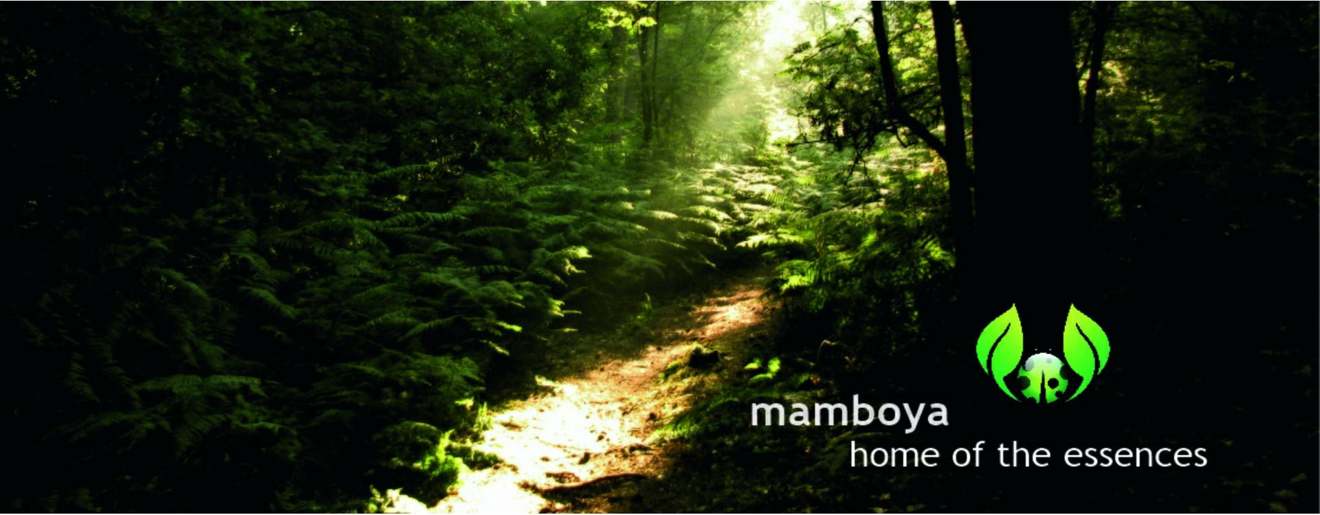 Mamboya Portrait